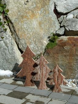 Zirbe Baum / Tanne mit Rinde (Borke)