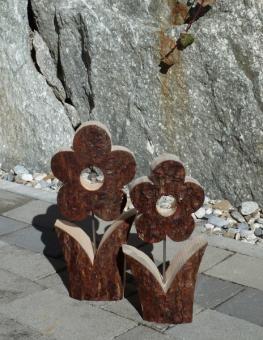Zirbe Blume mit Rinde (Borke)